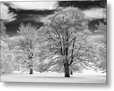 Winter Horse Chestnut Trees Monochrome Metal Print by Tim Gainey