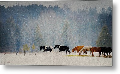 Winter Horses Metal Print by Ann Lauwers