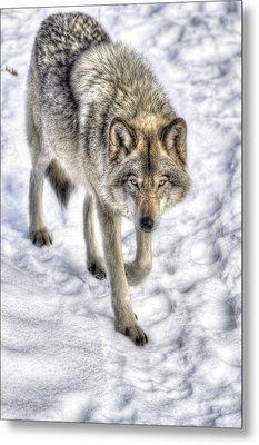 Winter Hunter Metal Print