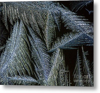Winter In Canada- Winter Frost Metal Print by Inspired Nature Photography Fine Art Photography
