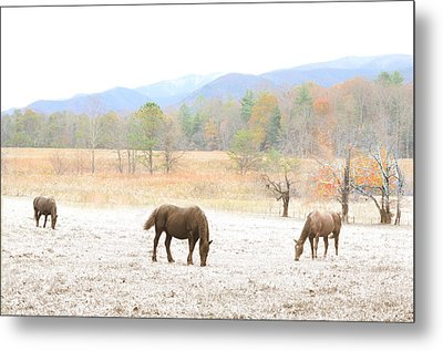 Winter In The Cove Metal Print by Gene Smith