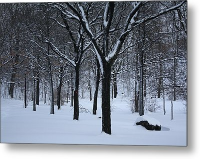 Metal Print featuring the photograph Winter In The Park by Dora Sofia Caputo Photographic Art and Design