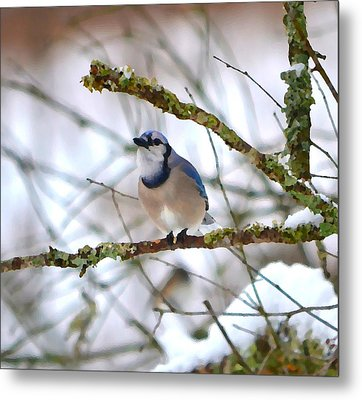 Winter Jay Metal Print