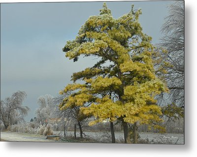 Metal Print featuring the photograph Winter Landscape by Debra Martz