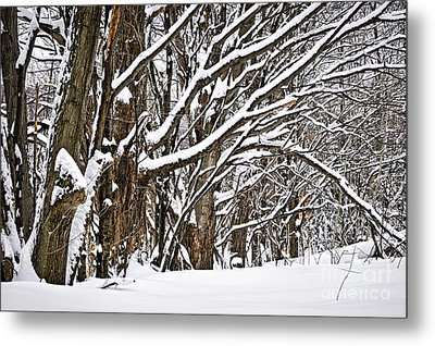 Winter Landscape Metal Print by Elena Elisseeva