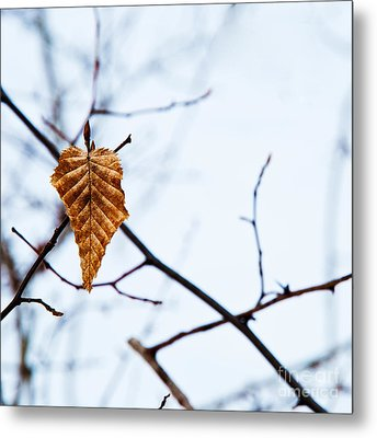 Metal Print featuring the photograph Winter Leaf by Kennerth and Birgitta Kullman