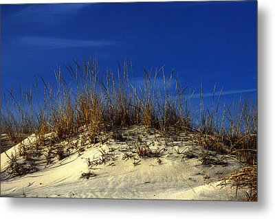 Metal Print featuring the photograph Winter Morning On The Dunes by Bill Swartwout