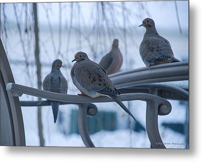 Metal Print featuring the photograph Winter Mourning by Phil Abrams