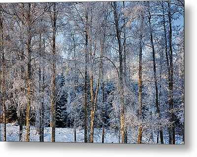 Winter Nature Ans Scenery Metal Print by Christian Lagereek