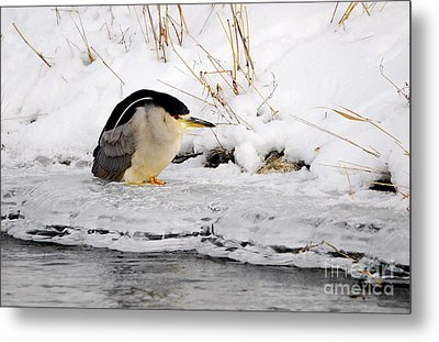 Winter Night Heron Metal Print