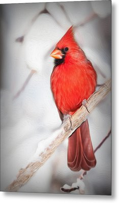 Winter Northern Cardinal Metal Print by Jana Thompson
