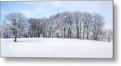 Winter Oak Metal Print by David Birchall