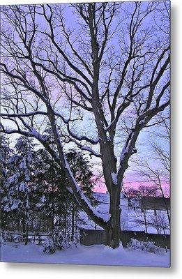 Winter Oak 2 Metal Print