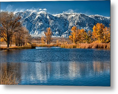 Winter Or Fall Metal Print by Cat Connor