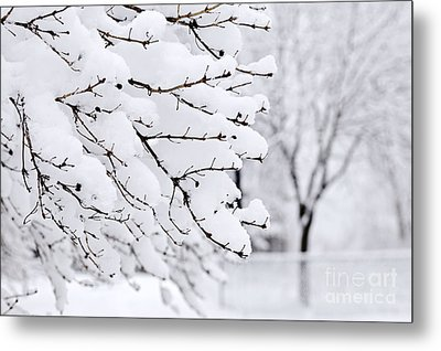 Winter Park Under Heavy Snow Metal Print by Elena Elisseeva