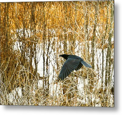 Winter Passage Metal Print by Judy Wood