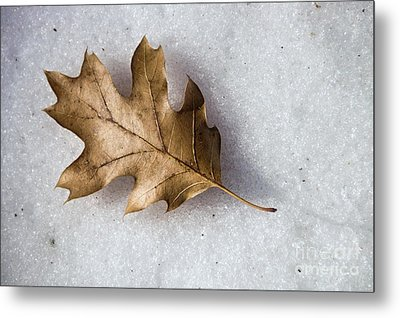 Winter Metal Print by Peggy Hughes