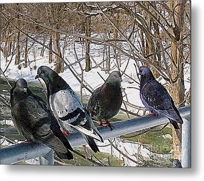 Winter Pigeon Party Metal Print