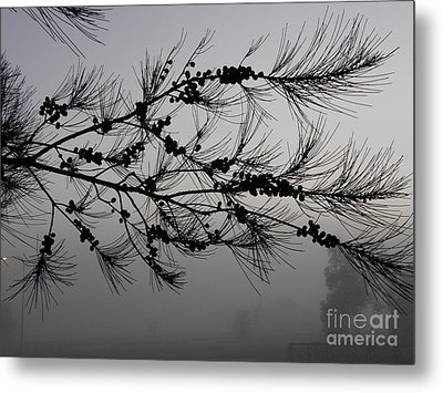 Winter Pine Branch Metal Print