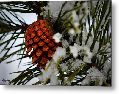 Metal Print featuring the photograph Winter Pine by Guy Hoffman