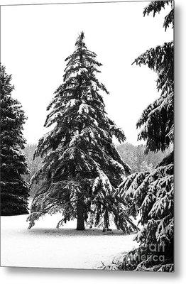 Winter Pines Metal Print by Ann Horn
