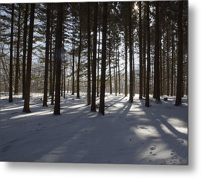 Winter Pines Metal Print