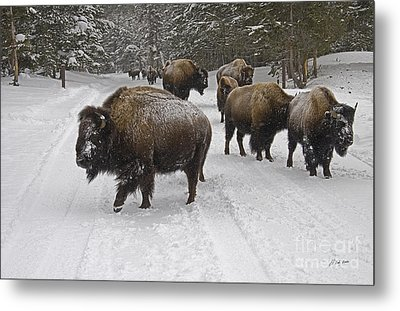 Winter Procession-signed Metal Print by J L Woody Wooden
