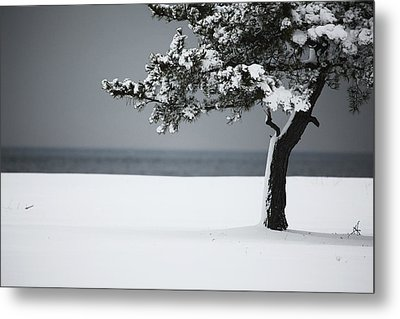 Winter Quiet Metal Print by Karol Livote