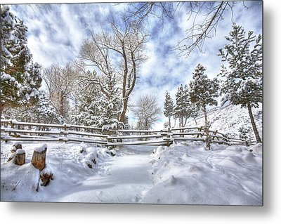 Winter Radiance Metal Print