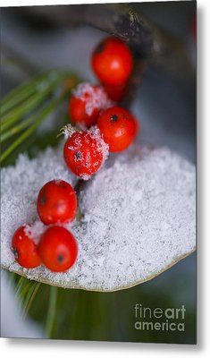 Winter Red Berries Metal Print by Birgit Tyrrell