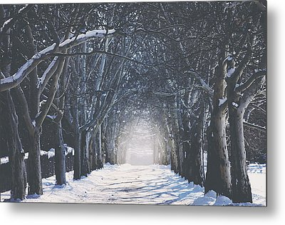 Winter Road Metal Print by Carrie Ann Grippo-Pike