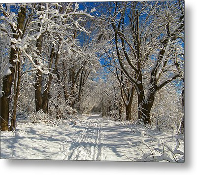Winter Road Metal Print by Raymond Salani III