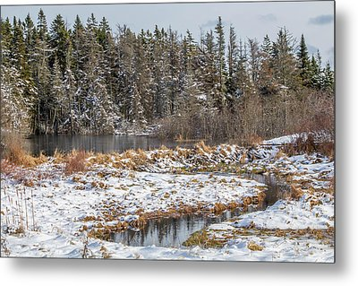 Winter Scene Maine  Metal Print by Trace Kittrell
