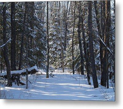 Metal Print featuring the photograph Winter Scene1 by Susan Crossman Buscho
