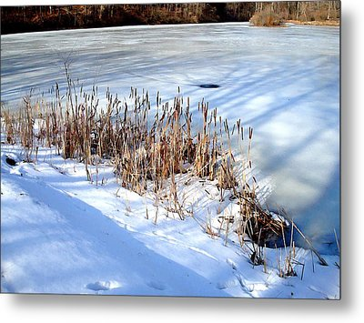 Winter Shadows Metal Print by BackHome Images