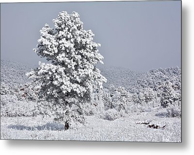 Metal Print featuring the photograph Winter Solitude by Diane Alexander