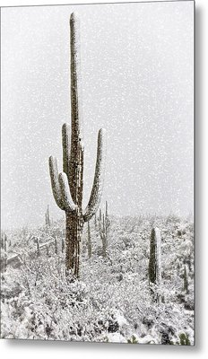 Winter Sonoran Style  Metal Print