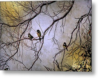 Winter Sparrow Dawn Metal Print by Barbara Chichester