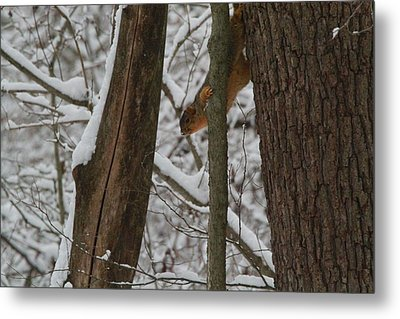 Winter Squirrel Metal Print by Dan Sproul