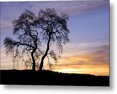 Metal Print featuring the photograph Winter Sunrise With Tree Silhouette by Priya Ghose