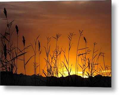 Winter Sunrise Metal Print by Tammy Espino