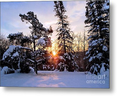Winter Sunrise Metal Print by Terry Elniski