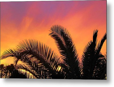 Winter Sunset Metal Print by Tammy Espino