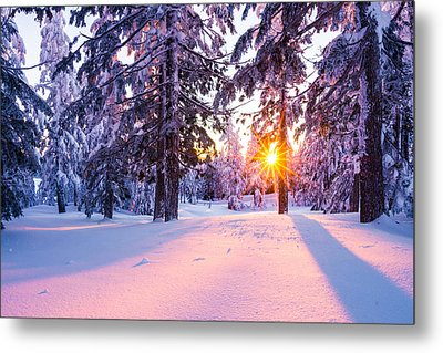 Winter Sunset Through Trees Metal Print by Priya Ghose