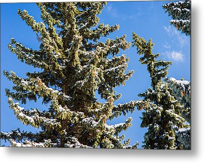 Winter Tale - Featured 3 Metal Print by Alexander Senin