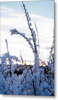 Winter Metal Print by Terry Reynoldson