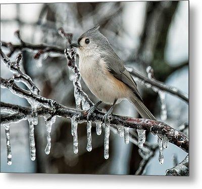 Winter Titmouse Metal Print by Lara Ellis