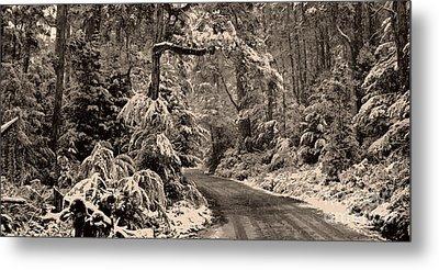 Winter Trail Metal Print