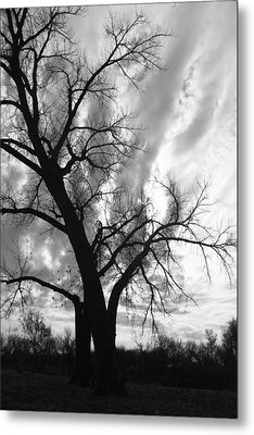 Winter Tree Metal Print by Alicia Knust
