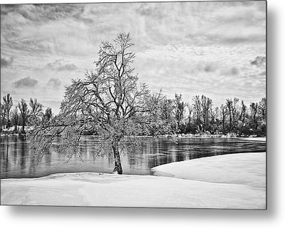 Winter Tree At The Park  B/w Metal Print by Greg Jackson